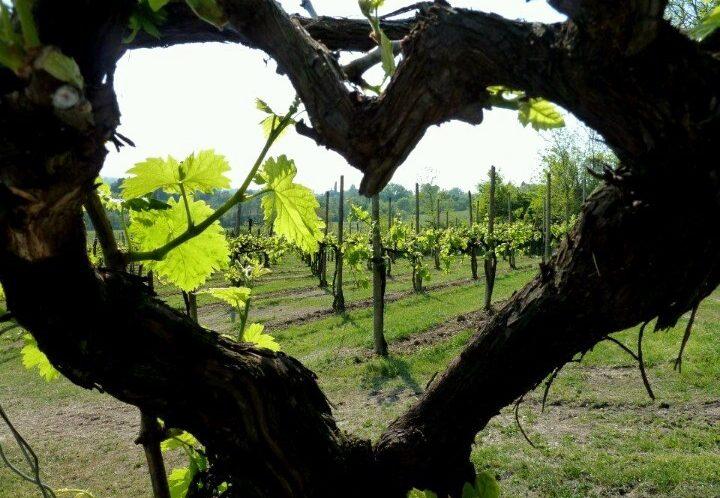Целувки и прегръдки или вино и мезе — ти избираш, но избирай съзнателно